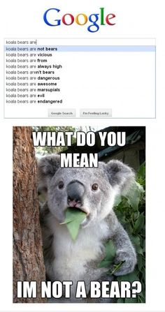 LOL! The Koala Bear's face!!