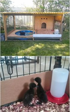 A Duck House