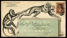 This is Schepp's Cocoanut 's actually envelope 'cover'....1887