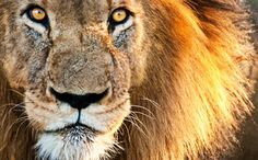 Congress Has an Epic Opportunity to Ban Wild Animals in Circuses | Care2 Causes **please sign petition at the end of the article!!! Or go to care2.com!! Help these animals!!!