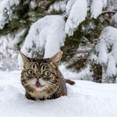 BUB, The Snow QUEEN.