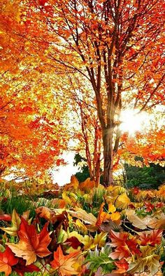 autumn beauty - trees 🔥