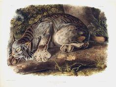 Risultati immagini per John James Audubon