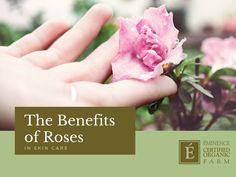 "Tell your skin ""I love you"" with the natural emollient properties of roses!"