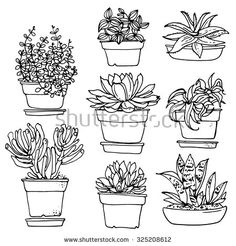 Flowers in pots painted black line on a white background. Vector drawing lines
