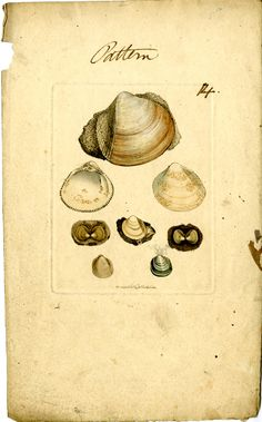 1810-1845, Pattern Plates for the Mineral Conchology of Great Britain