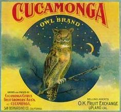 Print Title: Owl Orange Label - Upland, CA. Brighten up any space with high quality framed and ready to hang art prints. Owl Orange Label - Upland, CA is just one that helps you create effortless style and adds character to any room. Vintage Labels, Vintage Ads, Vintage Posters, Retro Ads, Vintage Ephemera, Vintage Food, Vintage Stuff, Vintage Paper, Vintage Signs