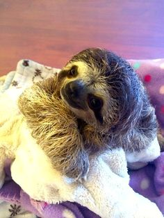 <3! I could look at these pictures of little Lunita all day! She's adorable! [Meet Lunita, The Cutest Baby Sloth On Planet Earth--buzzfeed]
