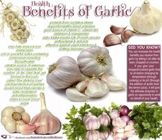 Health Benefits of Garlic - protects from Oxidative stress, supports healthy Blood pressure, good source of Vitamin C, Vitamin B6, Selenium, Manganese, daily intake reduces risk of MOST cancers