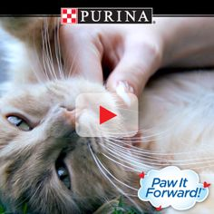 Watch our video for ways to celebrate National Pet Month! See how YOU can paw it forward™ for pets this May! PureLoveForPets.com.