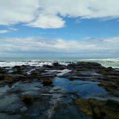 Petrified forest southland  In New Zealand beauty at its finest