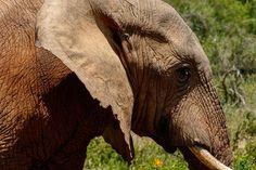 #PhotoOfTheDay by #MarkdeScande #Elephant #AddoElephantNationalPark #SouthAfrica