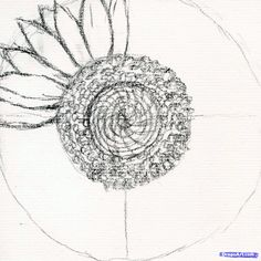 Flower Drawings Tips how to draw a sunflower, realistic sunflower step 4 Flower Drawing Tutorial Step By Step, Flower Drawing Tutorials, Flower Step By Step, Art Tutorials, Drawing Flowers, Flower Drawings, Drawing Step, Sunflower Sketches, Sunflower Drawing