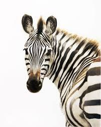 zebra face - Google Search