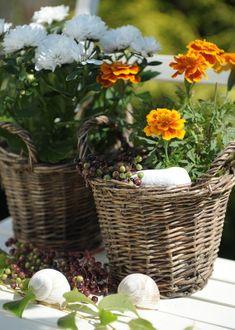 Toto ste o aksamietniciach určite nevedeli: Nenáročné letničky majú liečivé účinky - Pluska.sk Autumn Garden, Calendula, Wicker Baskets, Planting Flowers, Plants, Marigold, Cottage, Seasons, Decor