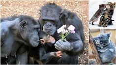 22 Animals Showing Affection That Will Melt Your Heart | Diply