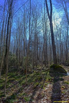 Oh there is just something about hiking in the spring where everything feels so alive and green! #hiking #spring #vtstateparks #grotonforest #optoutside #lifealive #liveadventurously #green #forest