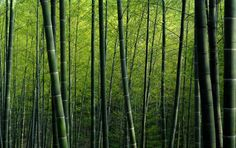 28 Nature Desktop Wallpapers : 744748 Bamboo Picture