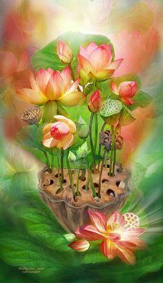 Healing Lotus Sacral