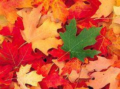 Sinfonia de Outono, por Oriza Martins - Reflexão do dia - Oriza Martins Home Page - Poemas Românticos - pensamentos - Mensagens - Seresta