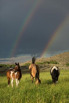 this-is-wild:  What Rainbow? by Scott E. Allen   Horses make a landscape more beautiful