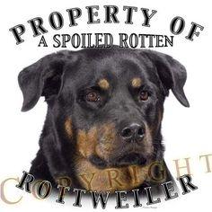 Rottweiler Property Of Adult Long Sleeve T Shirt - SMALL VincentStrangioStore http://www.amazon.com/dp/B002ZXRFAS/ref=cm_sw_r_pi_dp_PPvXtb1NKHZ61H4X