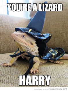 Pinning because I once dressed my bearded dragon, Shrek, like Macbeth to fulfill a British Literature video assignment