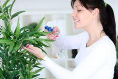Comment éliminer les moucherons ? Les moucherons ont envahi votre maison ? Ces petits insectes volants aiment également loger dans les plantes où dans la cuisine. Découvrez ces astuces de grand-mère pour éliminer les moucherons de votre intérieur.