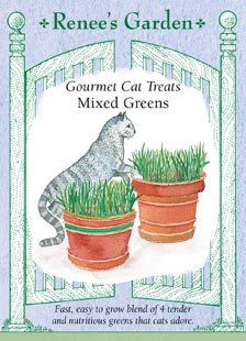 Cat Treats, Gourmet, Mixed Greens Renee's Garden http://www.amazon.com/dp/B0000CES0O/ref=cm_sw_r_pi_dp_iVrtvb09Q3GB2