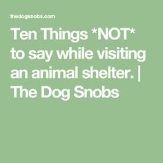 Ten Things *NOT* to say while visiting an animal shelter. | The  Dog Snobs