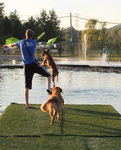 WagsPark Private membership dog park