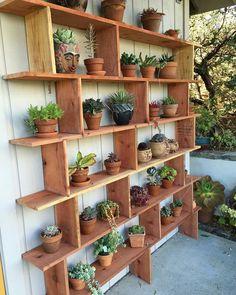 My husbands wonderful succulent shelf is part of Garden shelves - Plant Shelves Outdoor, Garden Shelves, Outdoor Plants, Outdoor Gardens, Outdoor Plant Stands, Indoor Gardening, Gardening Tips, House Plants Decor, Balcony Plants