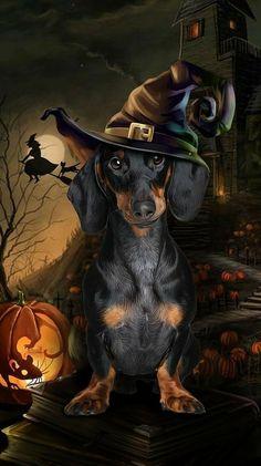 Halloween Fonts, Halloween Witch Decorations, Halloween Artwork, Halloween Painting, Halloween Pictures, Halloween Cat, Dapple Dachshund, Dachshund Art, Dachshund Gifts