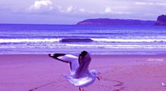 ✣… God turns you from one feeling to another and teaches by means of opposites so that you will have two wings to Fly, not one…   ✣  Rumi   Photograph © e11en♥  vaman - Umina Beach, Australia www.facebook.com/ellenvaman