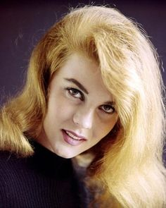 Ann-Margret, Swedish-American actress, wearing a purple knitted jumper in a studio portrait, against a purple background, circa Vintage Hollywood, Classic Hollywood, Pixie, Ann Margret Photos, Swedish American, Thing 1, Studio Portraits, Professional Photographer, American Actress
