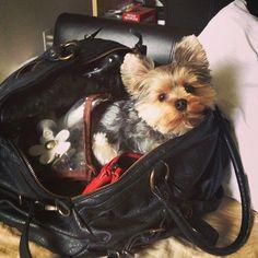 Take me with you? Pleaaaaaaase
