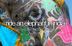 ride an elephant in india...or africa...preferably africa...i like the big ears =)