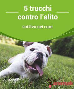 5 trucchi contro l'alito cattivo nei cani L'alito cattivo è uno sgradevole #problema, che in varie occasioni può far passare dei #momenti di difficoltà, anche nel caso dei #cani. #Consigli