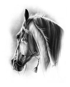Najlepsze Obrazy Na Tablicy Konie Rysunek Ołówkiem 82 Horse