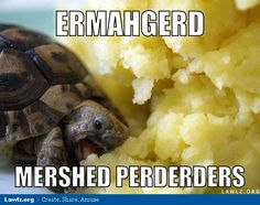 turtle-meme-ermahgerd-mershed-perderders-eating-mashed-potatoes.jpg (600×475)
