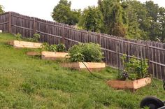 raised garden beds on a hill. Some of the space closest to the school is inclined so this might be what we have to do.