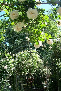 58 Best Garden Images In 2019 Garden Garden Design