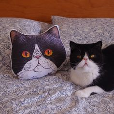 Panko the cat small face illustration cushion by eevamargita