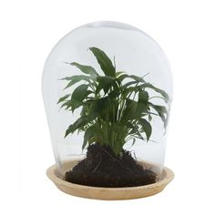 Creative Co-Op Secret Garden Glass Cloche with Wood Base
