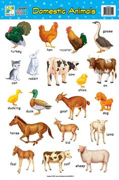 Image for Domestic Animals Chart