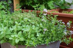 foresterblog.sk | living green in the city Herbs, City, Green, Plants, Herb, Cities, Planters, Plant, Spice