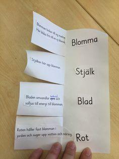 Idag när vi kom in i klassrummet satt det bilder på vårblommor på tavlan. Tillsammans klurade vi ut vad de heter och i vilken ordning vi brukar se dem blomma på våren. Jag valde sedan att titta närmare på blåsippan och vitsippan tillsammans med eleverna. Jag ger eleverna i uppdrag att tillsamm
