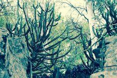 Tamanna S: #nature