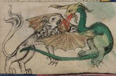 eadfrith:  A fire breathing dragon battles a lion in folio 13r of The Taymouth Hours Yates Thomspon MS 13 Images from the British Library Manuscript website. http://www.bl.uk/manuscripts/FullDisplay.aspx?ref=Yates_Thompson_MS_13