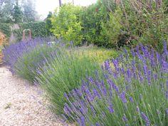 Ezekkel a tanácsokkal neked is gyönyörű levendulád lesz. Herb Garden, Interior Design Living Room, Diy And Crafts, Herbs, Backyard, Plants, Garden Ideas, Gardening, Garden